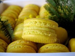 box mimosa macarons Jill