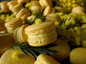 mimosa macaron pompom Jill