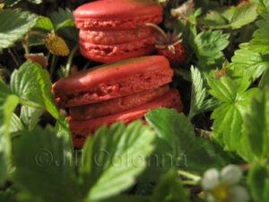 Wild Strawberry macaron paysage © Jill Colonna