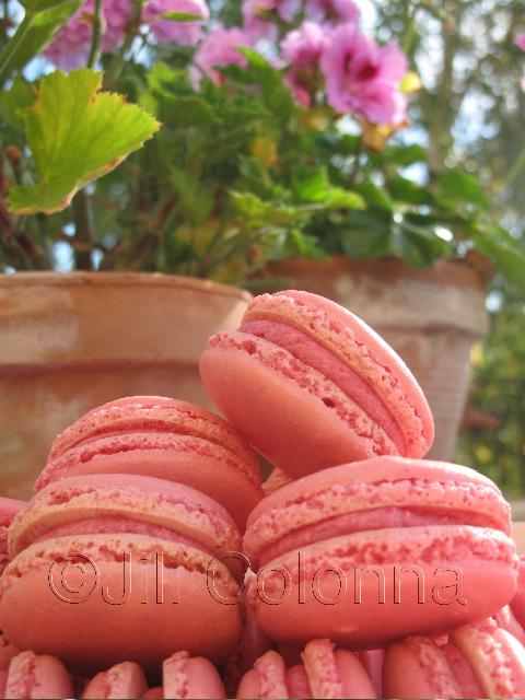 rose geranium macarons