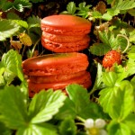 wild strawberry fraise des bois macarons