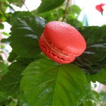 Hibiscus, campari and blood orange macaron