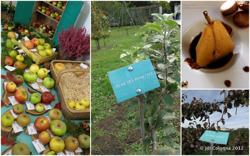apple harvest King's Vegetable Garden Versailles