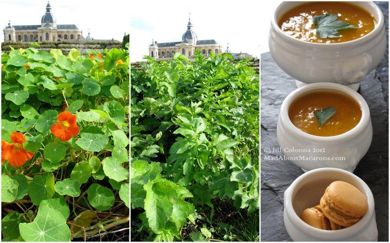 parsnip-soup-curry-macarons-vegetable-garden-versailles