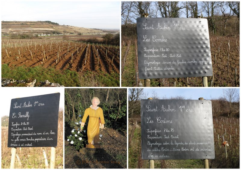 St Aubin Burgundy 130 hectares of premier cru wine