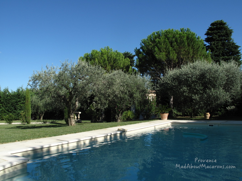 Provence swimming pool with olive trees