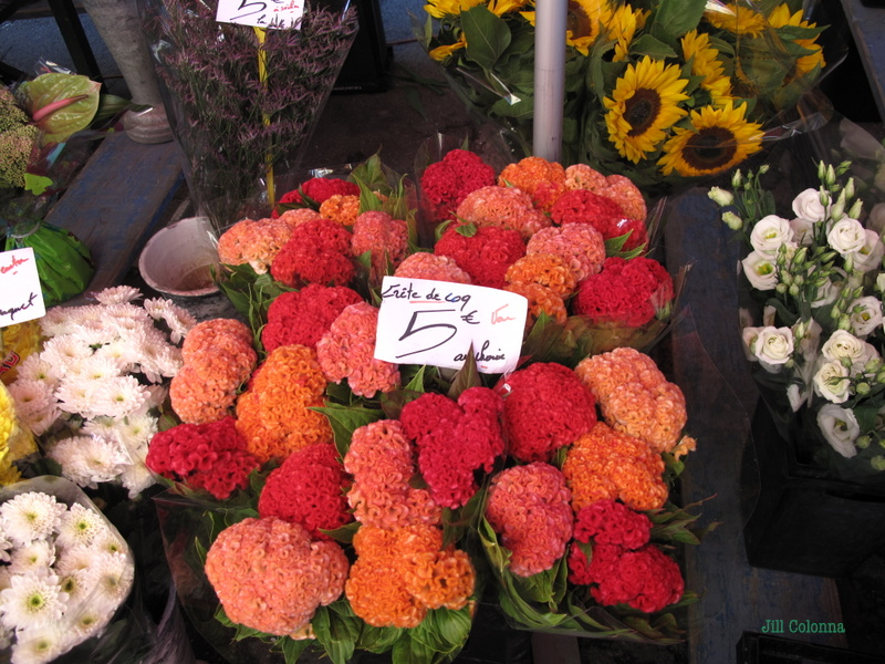 Tete de Coq French Flowers at the market Provence