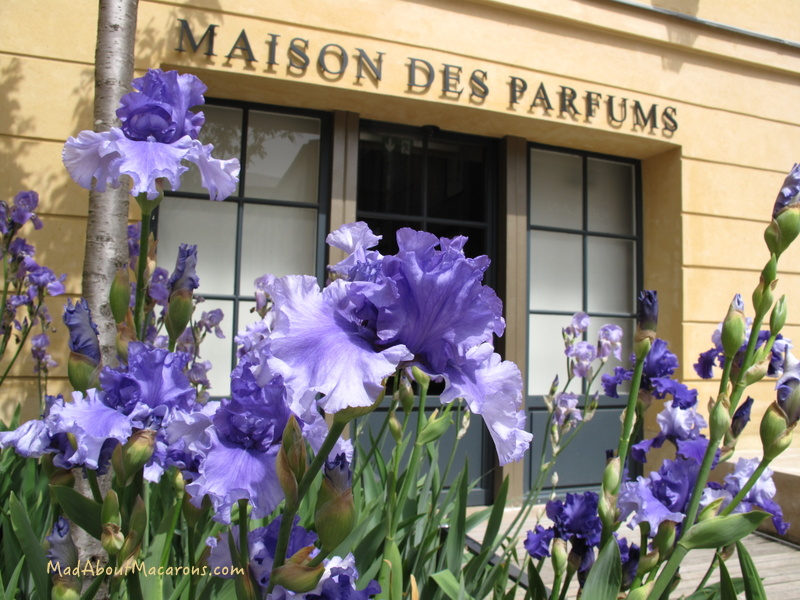 Irises at the maison des parfums versailles