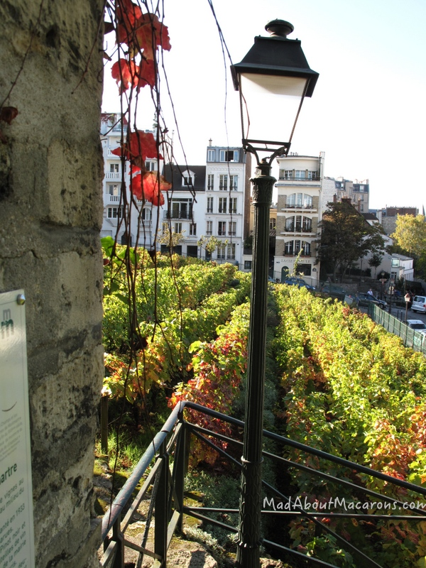 Clos Montmartre vineyard paris october