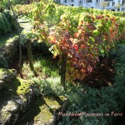 Autumn leaved vines in Montmartre, Paris