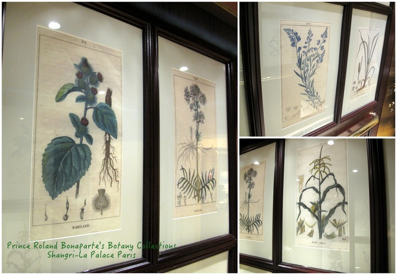 Botanist drawings of Prince Roland Bonaparte's herbarium collection