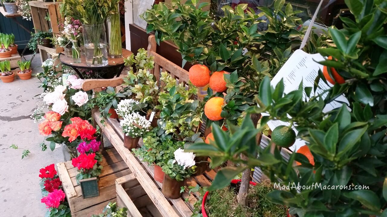 Oranges florist Paris winter