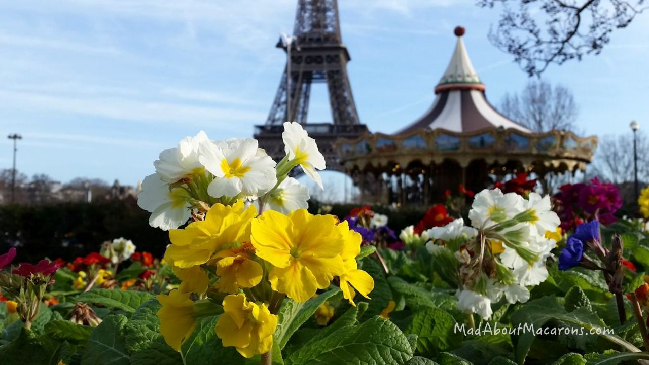 Primrose flowers at the Eiffel Tower winter spring Paris