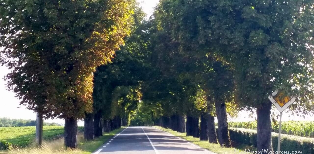 avenue of trees country roads in France