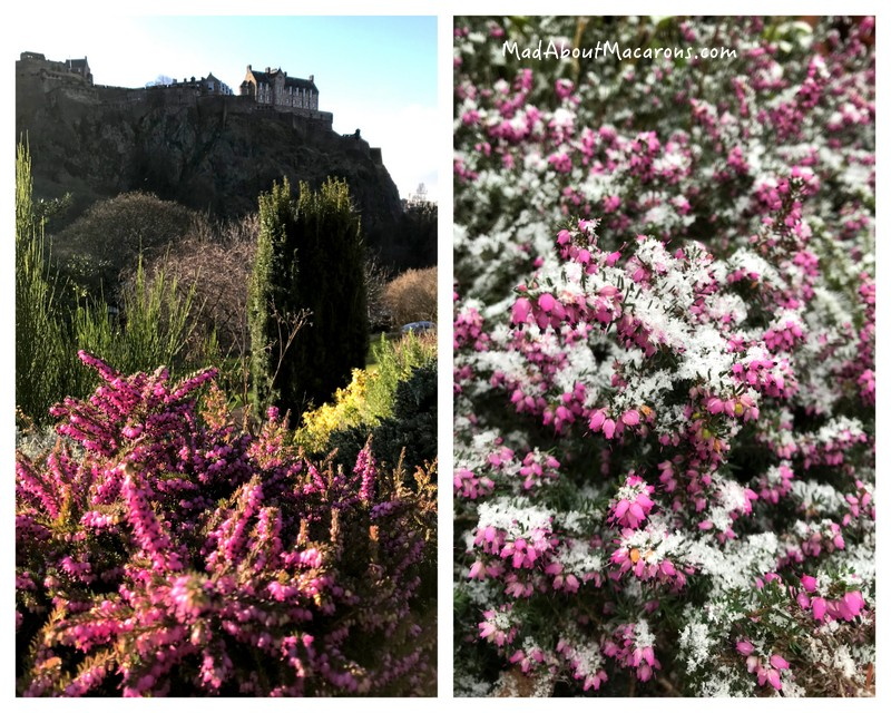 scottish heather Edinburgh
